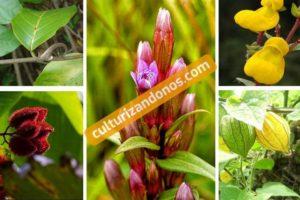 Plantas nativas del Perú para niños de primer grado de primaria