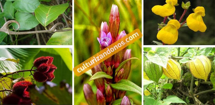 plantas nativas peru segun sus 3 regiones