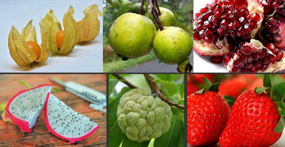 Fotos de las Frutas exóticas del peru