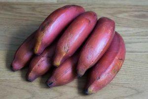 Banana roja tropical