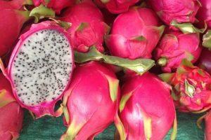 Pitahaya tropical para la salud