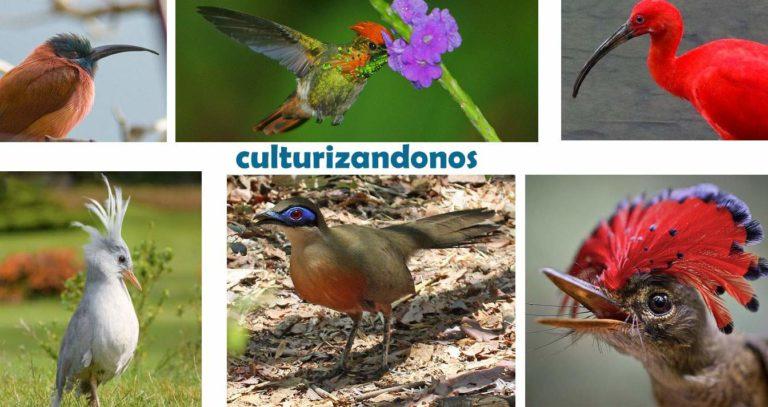 aves exoticas con sus nombres y tipos