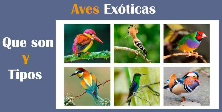 aves exoticas domesticas tipos y clasificación