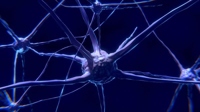 clasificacion de los neurotransmisores