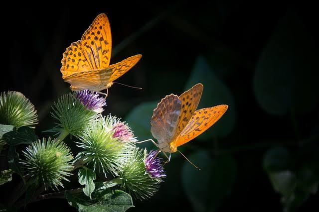 efecto mariposa en psicologia