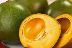 lucuma fruta andina tropical