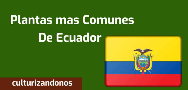 plantas mas comunes de ecuador
