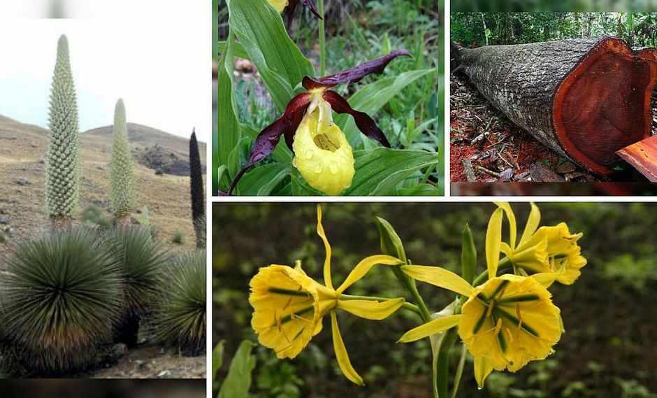 plantas nativas de la costa