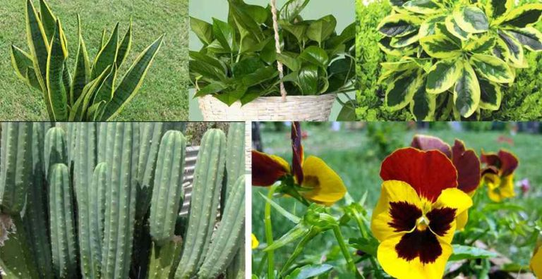 plantas ornamentales para casa
