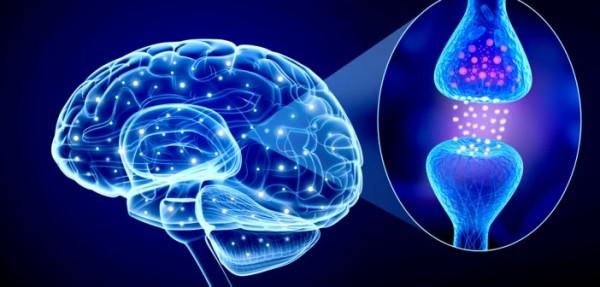 que son los neurotransmisores