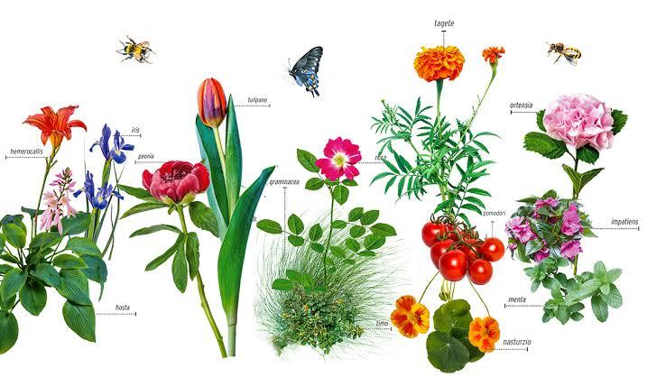 tipos y clasificacion de las plantas