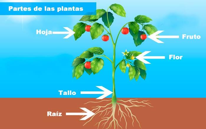 cuales son las partes de una planta